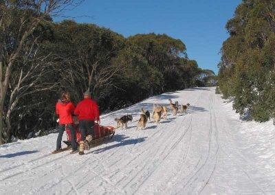 Bella Vista dog sledding 01 400x284 - Steamboat