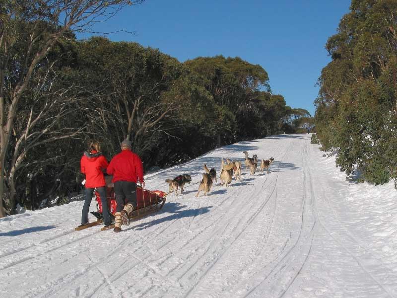 Bella Vista dog sledding 01 - Dog Sledding