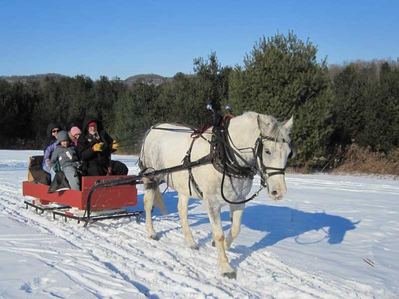 Bella Vista sleigh ride 01 - Sleigh Rides