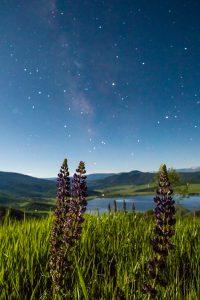 Mliky Way Stars Bella Vista 200x300 - Coming into the Light!