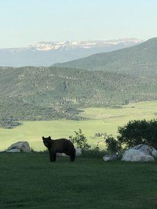 Bear 225x300 - Bear Tales